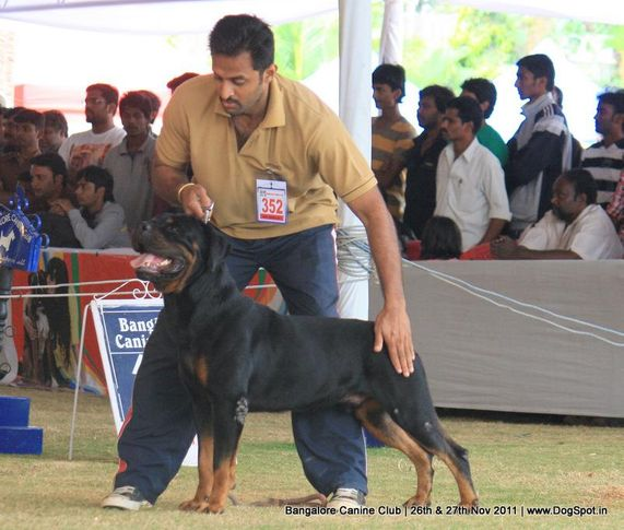 ex-352,rottwieler,sw-49,, Bangalore Canine  Club 2011, DogSpot.in