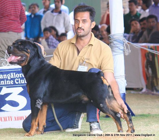 rottwieler,sw-49,, Bangalore Canine  Club 2011, DogSpot.in