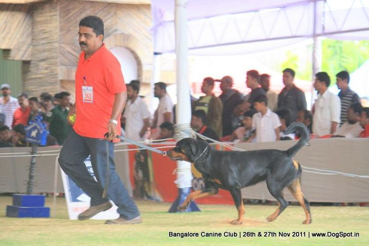 ex-362,rottwieler,sw-49,, Bangalore Canine  Club 2011, DogSpot.in