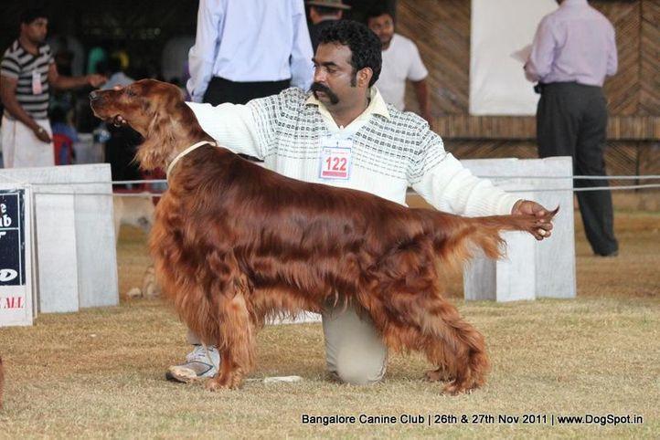 ex-122,irish setter,sw-49,, Bangalore Canine  Club 2011, DogSpot.in