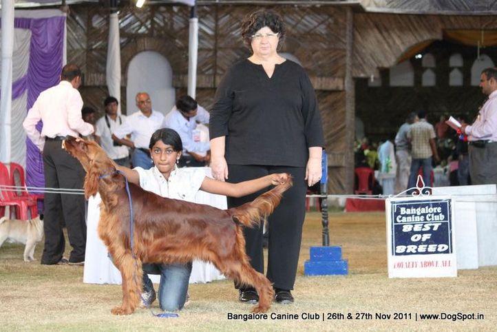 ex-119,irish setter,sw-49,, Bangalore Canine  Club 2011, DogSpot.in
