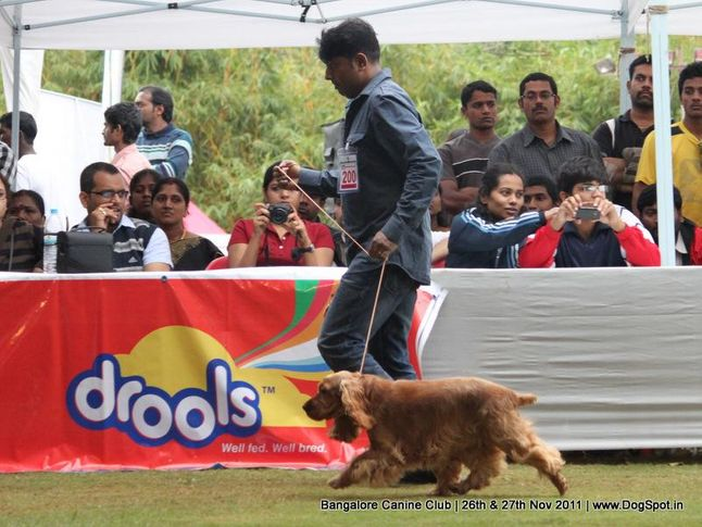 cocker spaniel,ex-200,sw-49,, Bangalore Canine  Club 2011, DogSpot.in