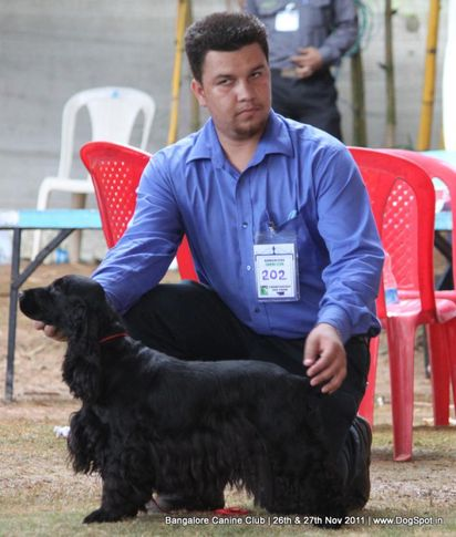 cocker spaniel,ex-202,sw-49,, Bangalore Canine  Club 2011, DogSpot.in
