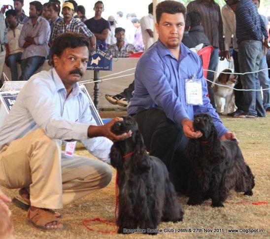 cocker spaniel,ex-199,sw-49,, Bangalore Canine  Club 2011, DogSpot.in