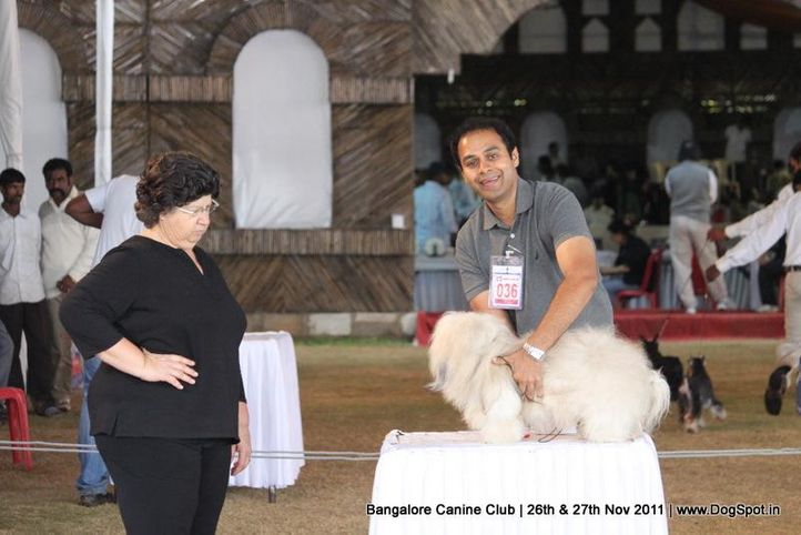 ex-36,havenese,sw-49,, Bangalore Canine  Club 2011, DogSpot.in