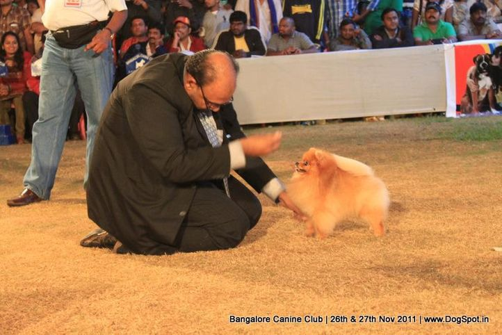 ex-14,pom,sw-49,, Bangalore Canine  Club 2011, DogSpot.in