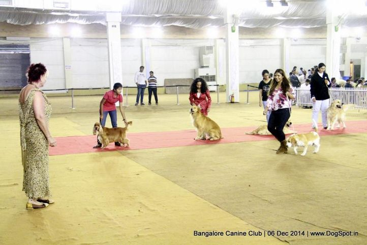 handling by ladies competition,labrador retriever,sw-138,, Bangalore Canine Club 2014, DogSpot.in