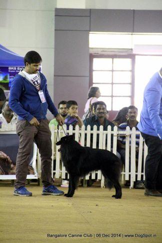 belgian shepherd,ex-450,sw-138,, Bangalore Canine Club 2014, DogSpot.in