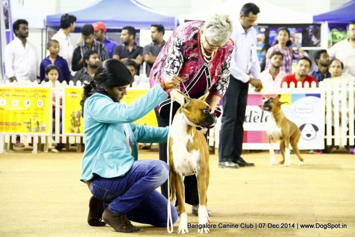 boxer,ex-219,sw-138,, Bangalore Canine Club 2014, DogSpot.in