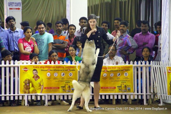 sw-138,, Bangalore Canine Club 2014, DogSpot.in