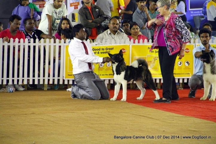 akita,ex-27,sw-138,, Bangalore Canine Club 2014, DogSpot.in
