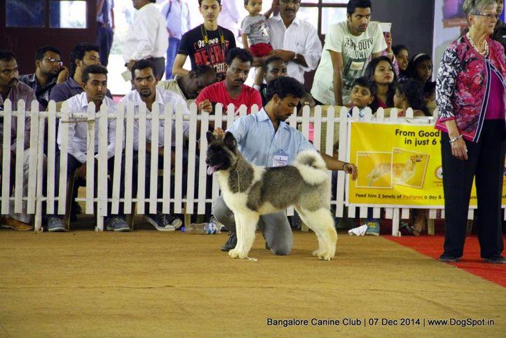akita,ex-28,sw-138,, Bangalore Canine Club 2014, DogSpot.in