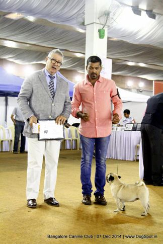 bob,bog,ex-17,pug,sw-138,, Bangalore Canine Club 2014, DogSpot.in