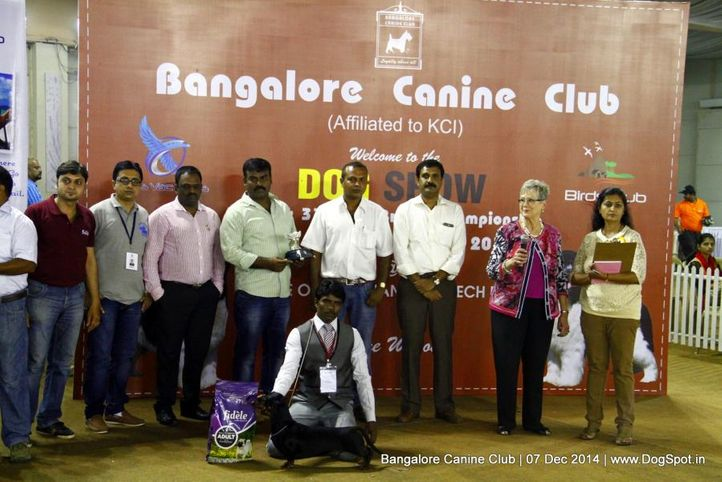 best in show,sw-138,, Bangalore Canine Club 2014, DogSpot.in