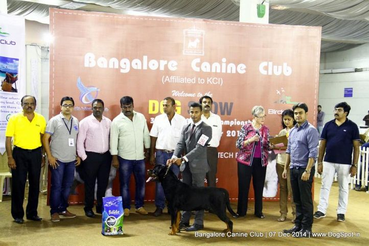 best in show,rottweiler,sw-138,, Bangalore Canine Club 2014, DogSpot.in