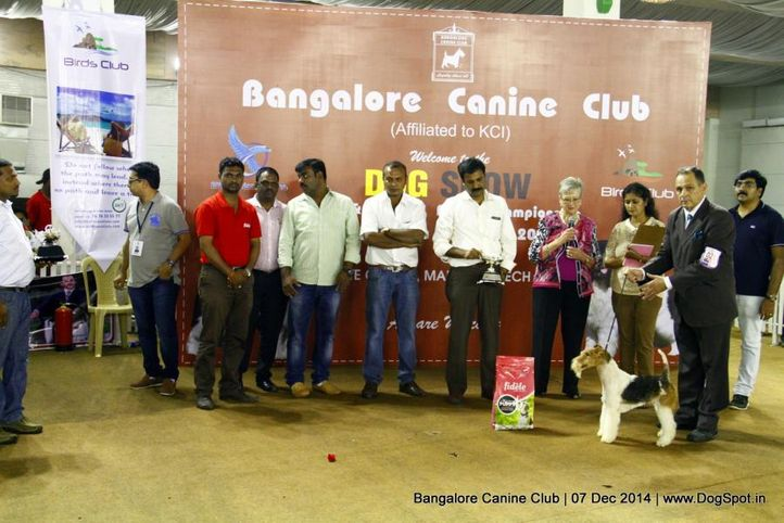 best in show,ex-25,fox terrier,sw-138,, Bangalore Canine Club 2014, DogSpot.in