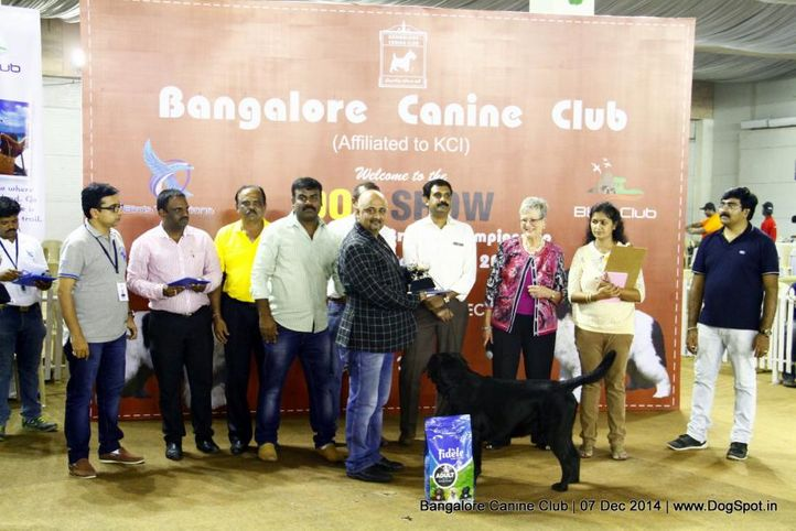 best in show,labrador retriever,sw-138,, Bangalore Canine Club 2014, DogSpot.in