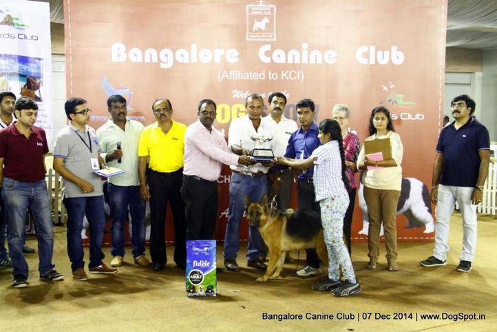 best in show,german shepherd,sw-138,, Bangalore Canine Club 2014, DogSpot.in