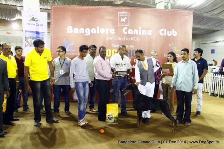best in show,doberman,sw-138,, Bangalore Canine Club 2014, DogSpot.in
