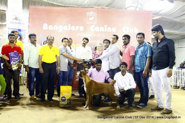 best in show,boxer,sw-138,, Bangalore Canine Club 2014, DogSpot.in