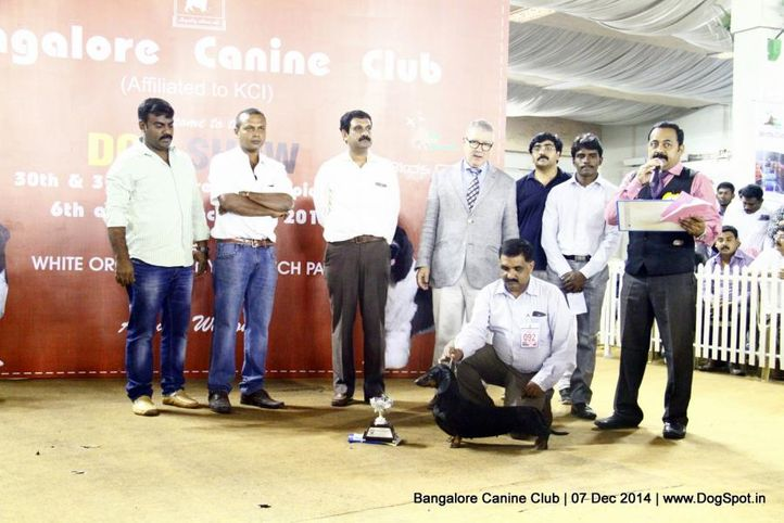 best in show,dachshund,ex-92,sw-138,, Bangalore Canine Club 2014, DogSpot.in