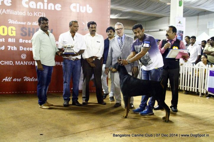 best in show,doberman,sw-138,, Bangalore Canine Club 2014, DogSpot.in