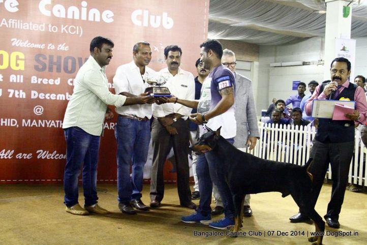 best in show,doberman,ex-272,sw-138,, Bangalore Canine Club 2014, DogSpot.in