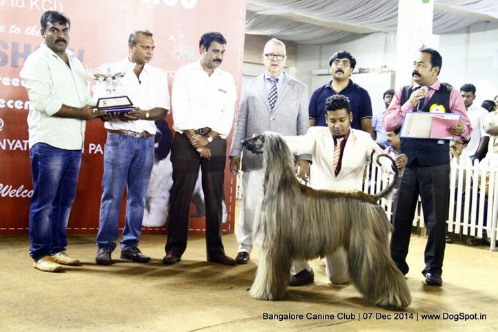 afghan hound,best in show,sw-138,, Bangalore Canine Club 2014, DogSpot.in