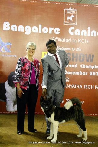 akita,best in show,sw-138,, Bangalore Canine Club 2014, DogSpot.in
