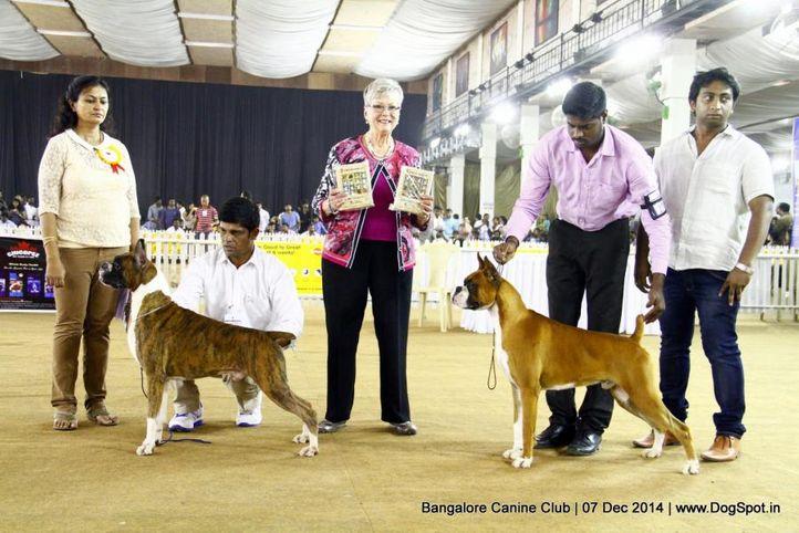 bob,boxer,ex-218,ex-247,rbob,sw-138,, Bangalore Canine Club 2014, DogSpot.in