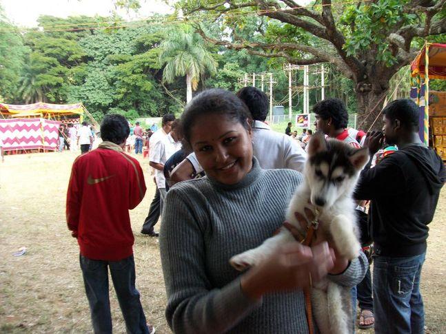Siberian Husky, Bangalore Canine Club Dog Show 21st Nov 2009, DogSpot.in