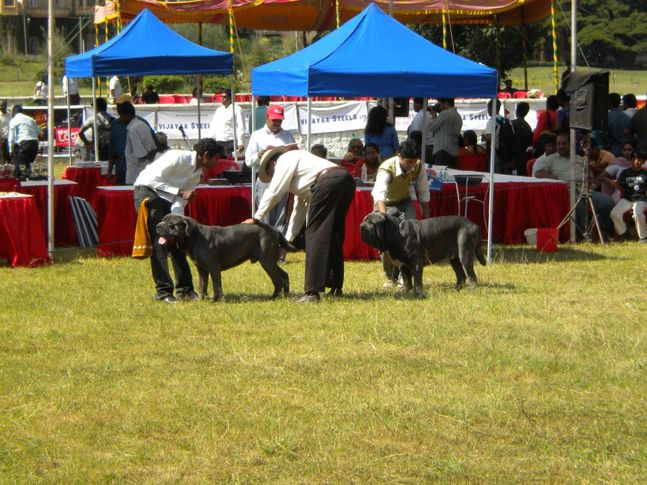 , Bangalore Canine Club Dog Show 21st Nov 2009, DogSpot.in
