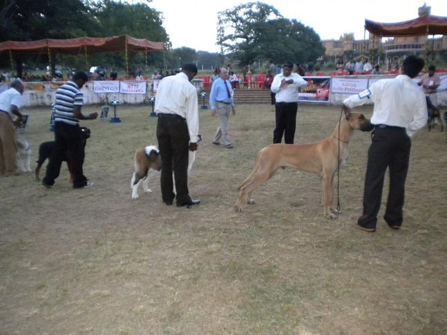 Line up, Bangalore Canine Club Dog Show 21st Nov 2009, DogSpot.in