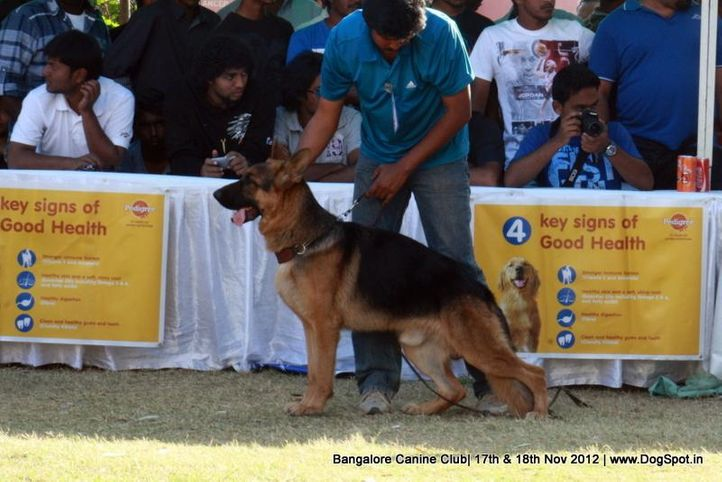 ex-433,german shepherd,sw-69,, RAAHBAR'S MADRID, German Shepherd Dog, DogSpot.in