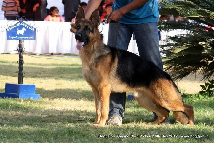 ex-433,german shepherd,sw-69,, RAAHBAR'S MADRID, German Shepherd Dog, DogSpot.in