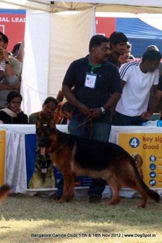 ex-441,german shepherd,sw-69,, RABY VON DER PISTE TROPHE, German Shepherd Dog, DogSpot.in