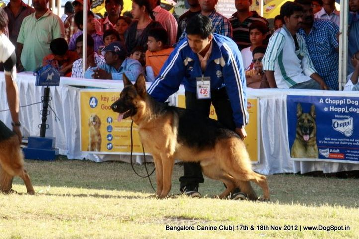 ex-436,german shepherd,sw-69,, WILDSTROBE'S AJAX, German Shepherd Dog, DogSpot.in