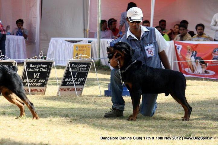ex-371,rottweiler,sw-69,, CIBEES CELISTIN, Rottweiler, DogSpot.in