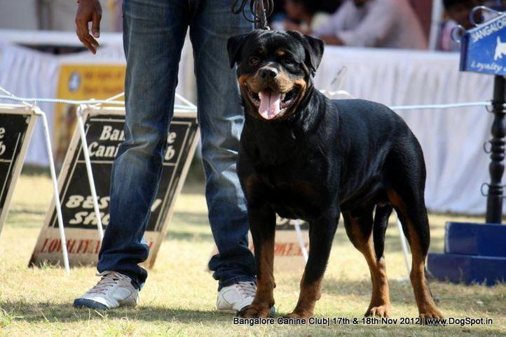 ex-372,rottweiler,sw-69,, Cido Wolf Stamm, Rottweiler, DogSpot.in