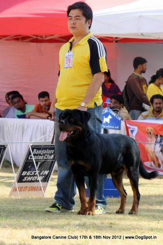 ex-378,rottweiler,sw-69,, CH.IND.CH.MOM. CH. CYP. CH. BOS. AMOS DARK FORCE, Rottweiler, DogSpot.in