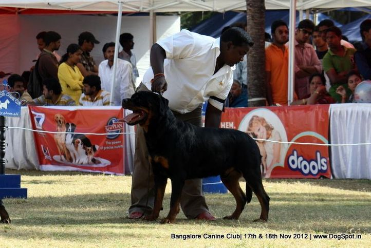 ex-380,rottweiler,sw-69,, SANYADOR'S JERANAMO JAZZ, Rottweiler, DogSpot.in