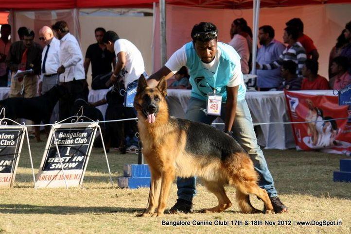 ex-450,german shepherd,sw-69,, LUX OF ZEDEX, German Shepherd Dog, DogSpot.in