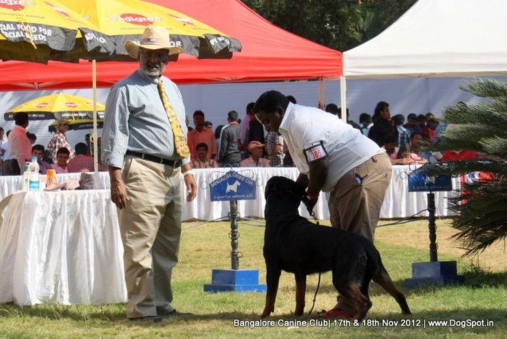 ex-385,rottweiler,sw-69,, SANYDOR'S MARY O BLOOM, Rottweiler, DogSpot.in