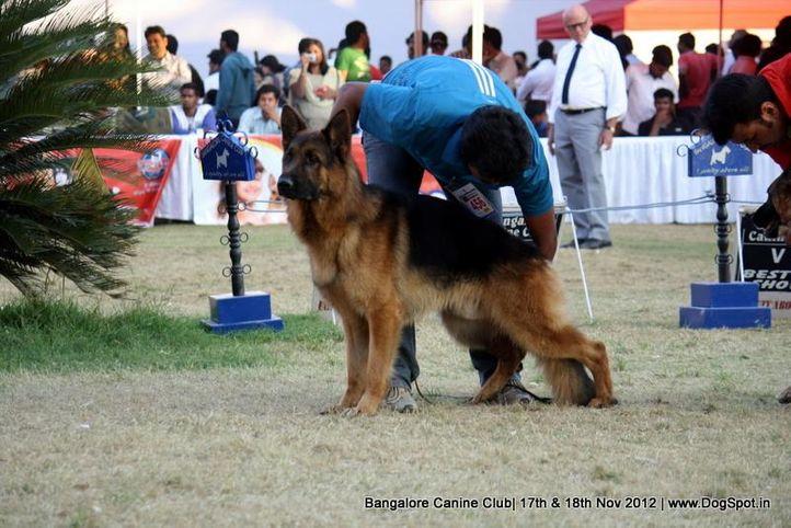 ex-456,german shepherd,sw-69,, JURI VOM STIEGLERHOF, German Shepherd Dog, DogSpot.in