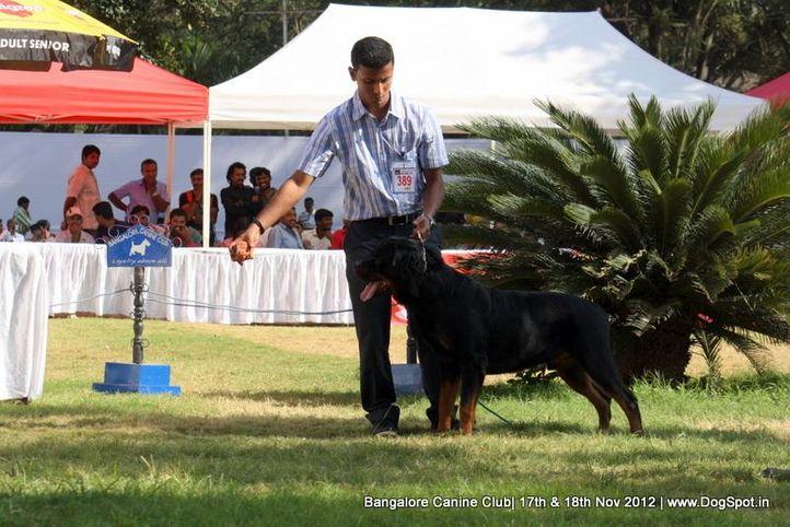 ex-389,rottweiler,sw-69,, ARNY VON ALEKSANDRAS, Rottweiler, DogSpot.in