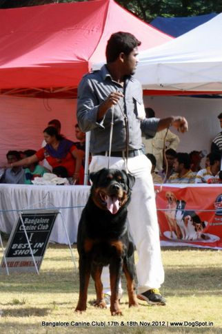 ex-391,rottweiler,sw-69,, IND. CH. SANYABORS NICLODON A MASK, Rottweiler, DogSpot.in