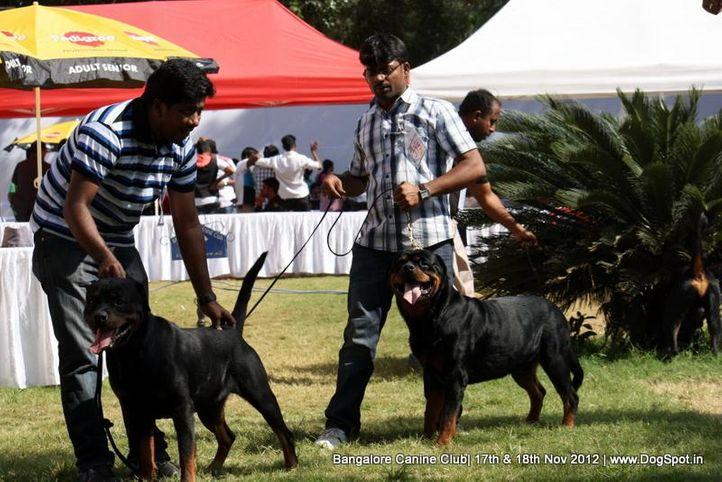 ex-375,rottweiler,sw-69,, YAHOO VON KELEMEN, Rottweiler, DogSpot.in