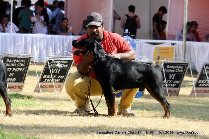 rottweiler,sw-69,, Bangalore Dog Show 2012 , DogSpot.in