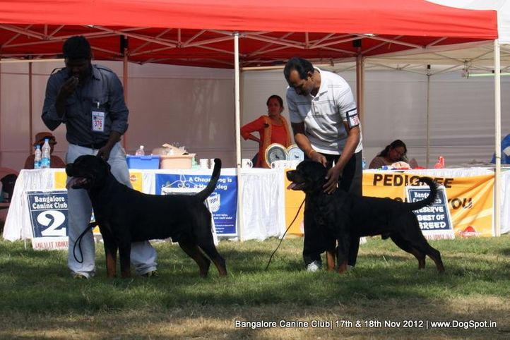 ex-376,rottweiler,sw-69,, SUPREME'S MAB BO, Rottweiler, DogSpot.in