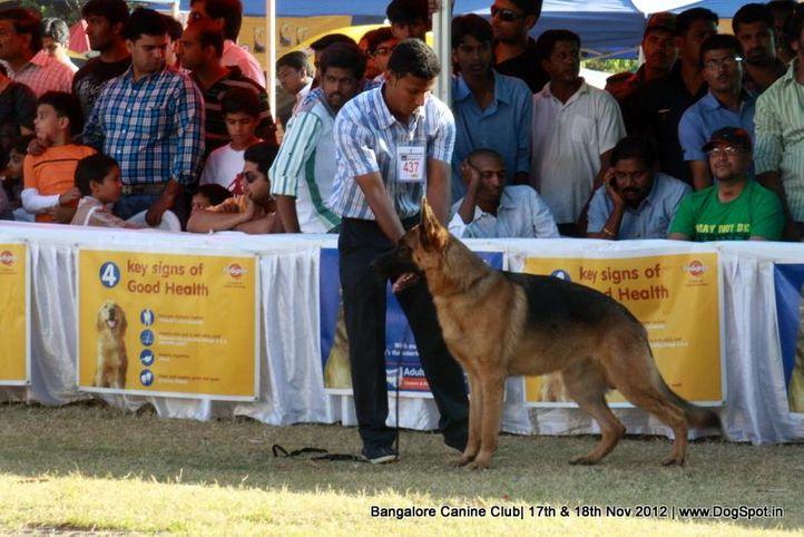 ex-437,german shepherd,sw-69,, AGIRO OF DEVALABERG, German Shepherd Dog, DogSpot.in